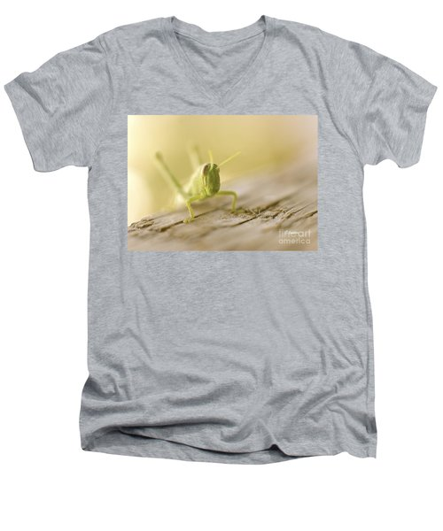Little Grasshopper Men's V-Neck T-Shirt by Claudia Ellis