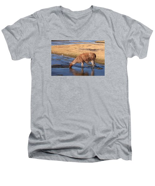 Llama Drinking In River Men's V-Neck T-Shirt