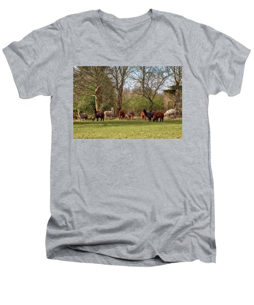 Men's V-Neck T-Shirt featuring the photograph Alpacas In Scotland by Jeremy Lavender Photography