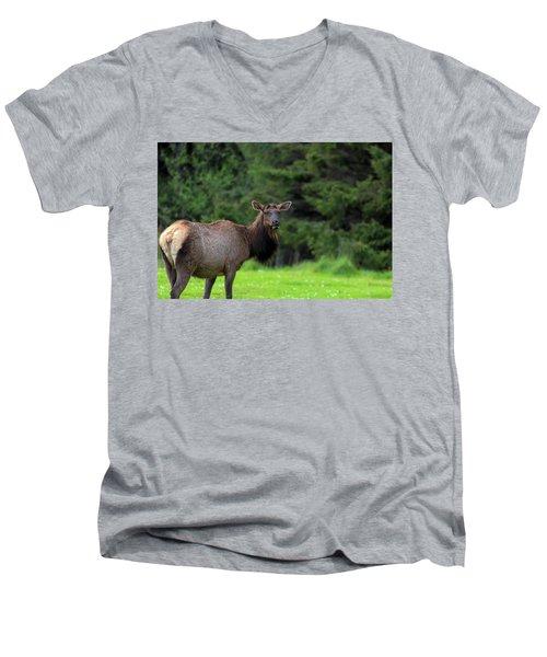Lone Elk At Ecola State Park Men's V-Neck T-Shirt