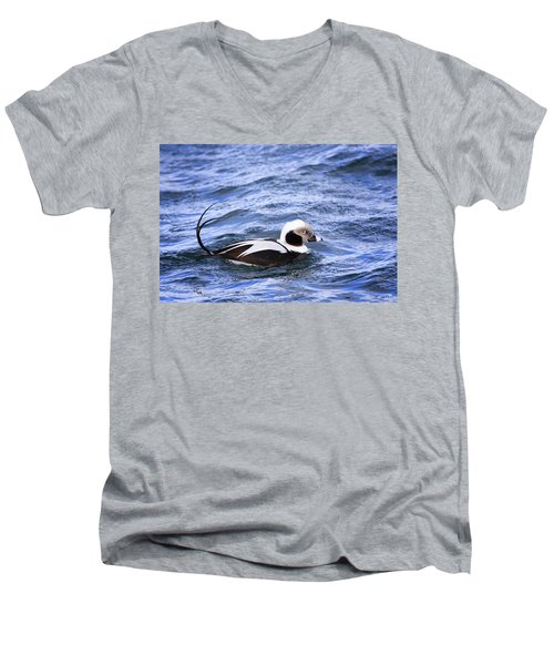 Long-tailed Duck 2 Men's V-Neck T-Shirt by Gary Hall