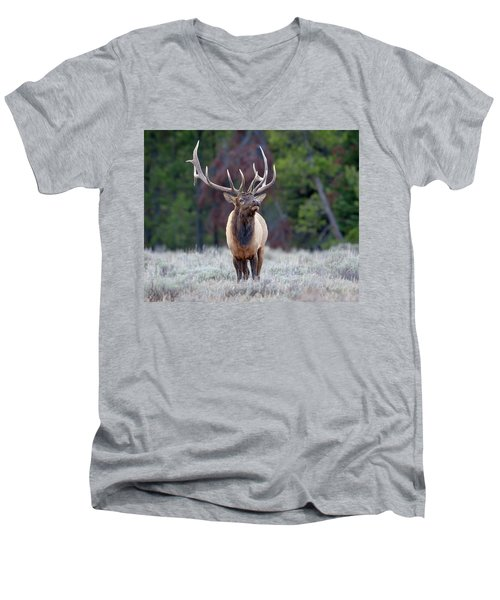 Majestic Bull Elk Men's V-Neck T-Shirt by Jack Bell