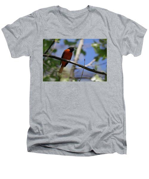 Male Baltimore Oriole Men's V-Neck T-Shirt