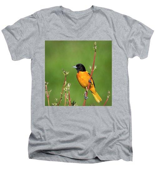Male Baltimore Oriole Posing Men's V-Neck T-Shirt