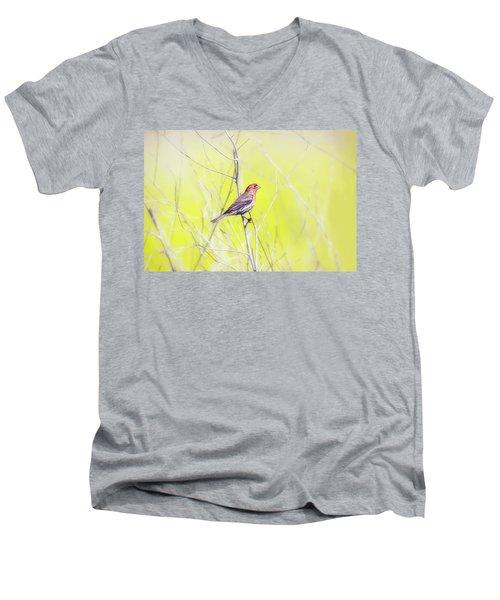 Male Finch On Bare Branch Men's V-Neck T-Shirt