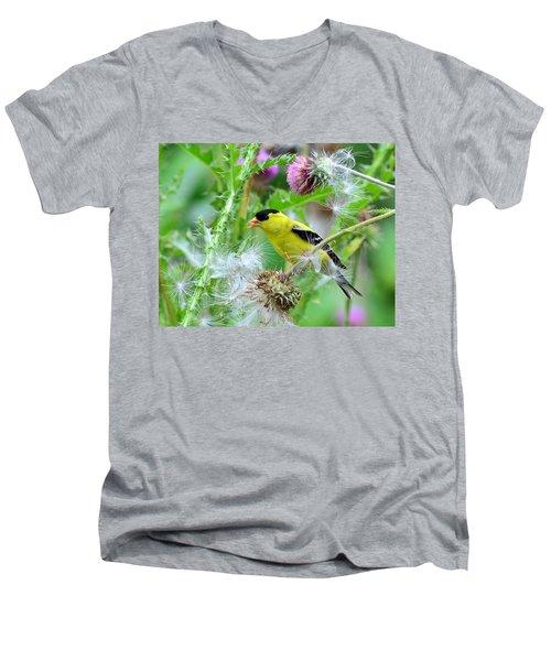 Male Goldfinch Men's V-Neck T-Shirt by Kathy Eickenberg