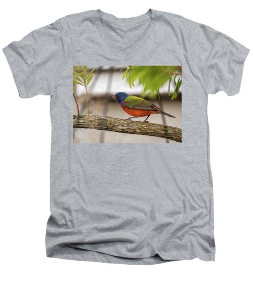 Male Painted Bunting Men's V-Neck T-Shirt