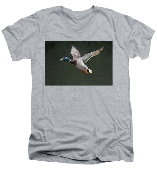 Mallard Drake In Flight Men's V-Neck T-Shirt