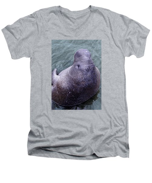 Men's V-Neck T-Shirt featuring the photograph Manatee Seen From Dock- Up Close And Personal by Penny Lisowski