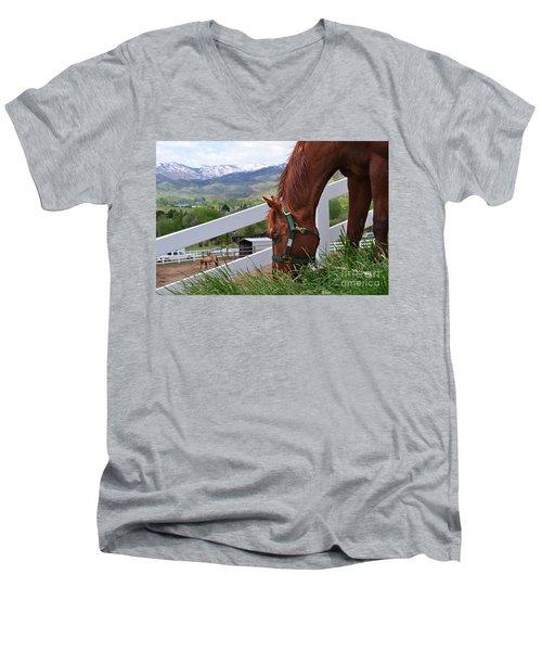 Mccool Grazing Men's V-Neck T-Shirt