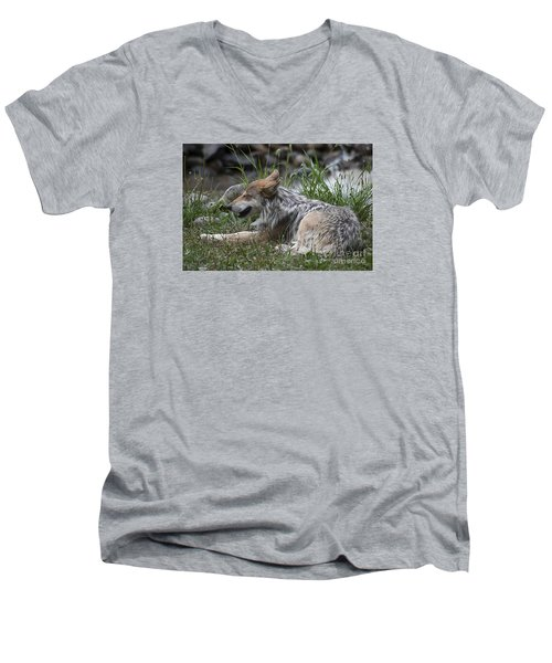 Men's V-Neck T-Shirt featuring the photograph Mexican Wolf 20120714_112a by Tina Hopkins