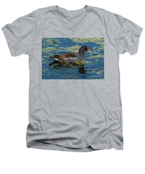 Moorhen Men's V-Neck T-Shirt