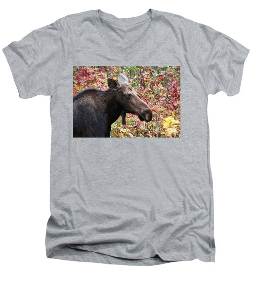Men's V-Neck T-Shirt featuring the photograph Moose And Fall Leaves by Peggy Collins
