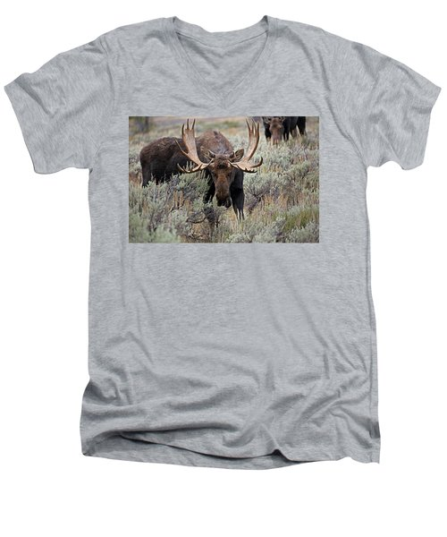Moose In The Sage Men's V-Neck T-Shirt