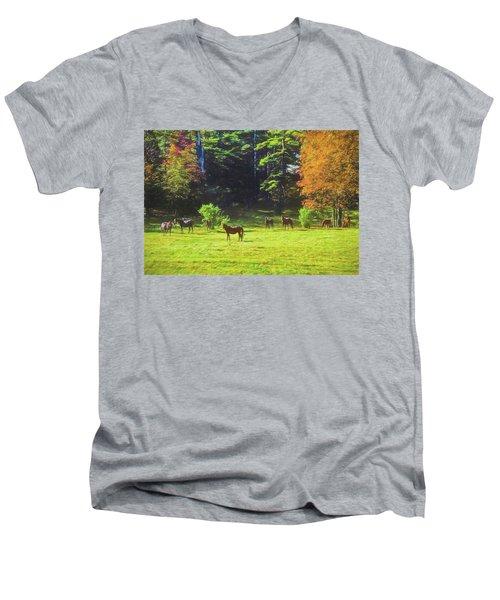 Morgan Horses In Autumn Pasture Men's V-Neck T-Shirt