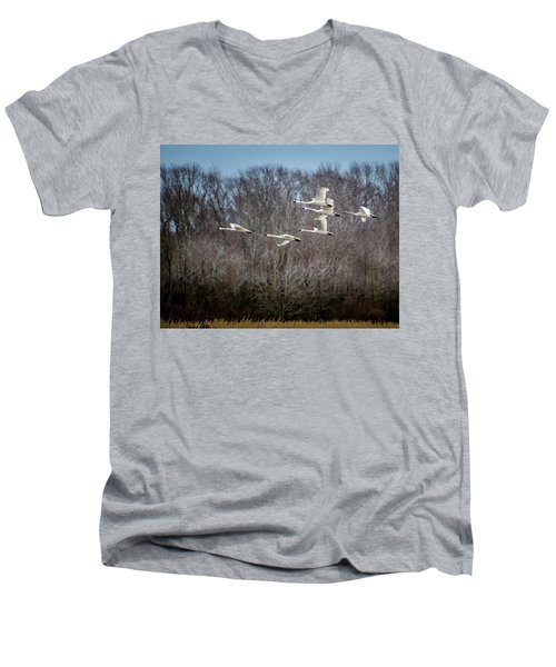Morning Flight Of Tundra Swan Men's V-Neck T-Shirt