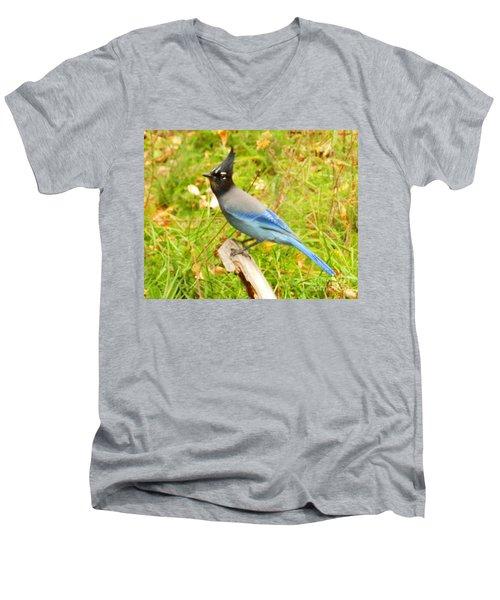 Mountain Blue Jay Men's V-Neck T-Shirt