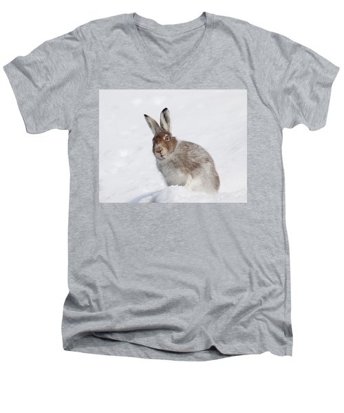 Mountain Hare In Winter Men's V-Neck T-Shirt