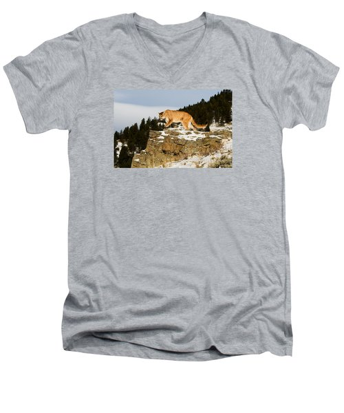 Mountain Lion On Rocks Men's V-Neck T-Shirt