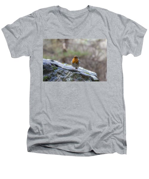 Mountain Robin Men's V-Neck T-Shirt