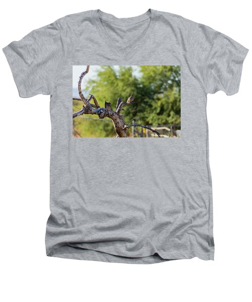 Mourning Dove In Old Tree Men's V-Neck T-Shirt
