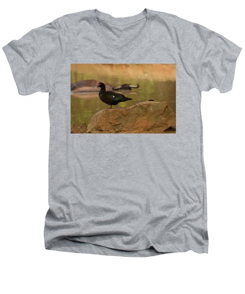 Muscovy Duck Men's V-Neck T-Shirt