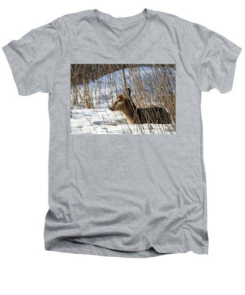 Napping Fawn Men's V-Neck T-Shirt by Brook Burling