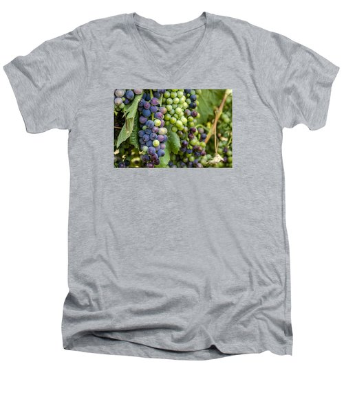 Natures Colors In Wine Grapes Men's V-Neck T-Shirt