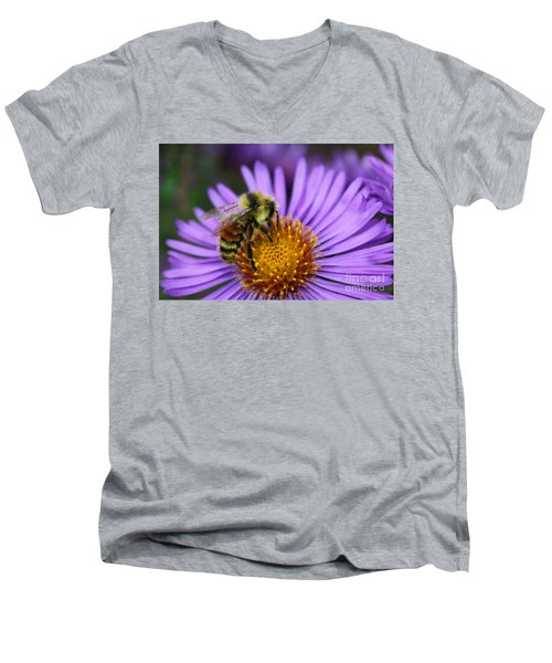 New England Aster And Bee Men's V-Neck T-Shirt by Steve Augustin