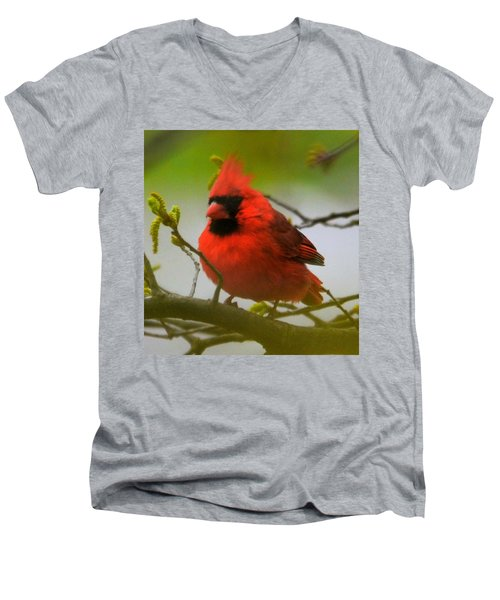 North Carolina Cardinal Men's V-Neck T-Shirt