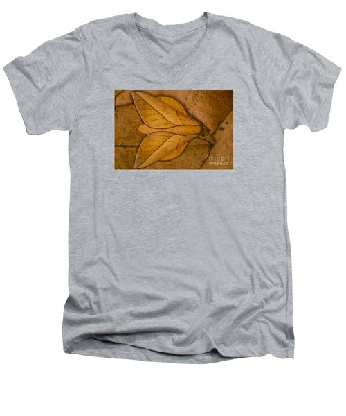 Oiticella Convergens Moth Men's V-Neck T-Shirt