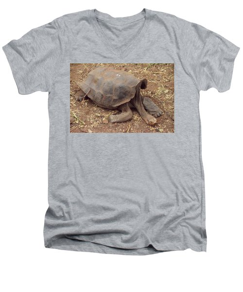 Old Tortoise Men's V-Neck T-Shirt by Will Burlingham