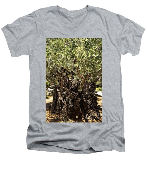 Men's V-Neck T-Shirt featuring the photograph Olive Tree by Mae Wertz