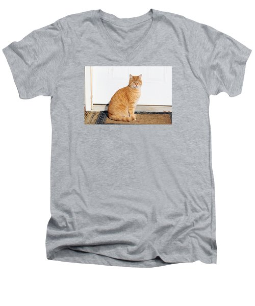 Orange Tabby Cat Men's V-Neck T-Shirt by Jana Russon