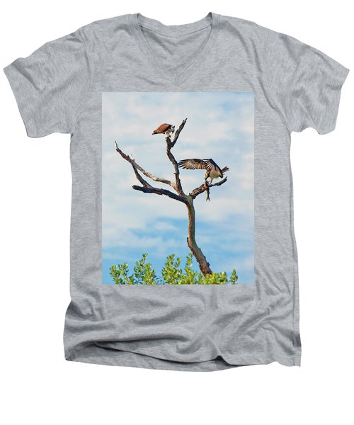 Osprey Feast Men's V-Neck T-Shirt