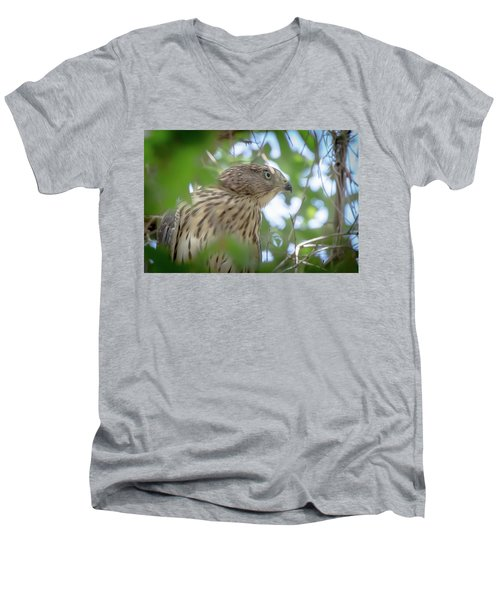 Red-shouldered Hawk Fledgling 1 Men's V-Neck T-Shirt