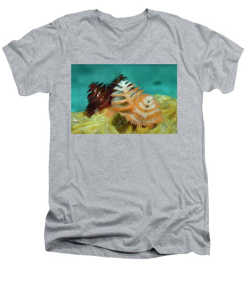 Men's V-Neck T-Shirt featuring the photograph Pair Of Christmas Tree Worms by Jean Noren