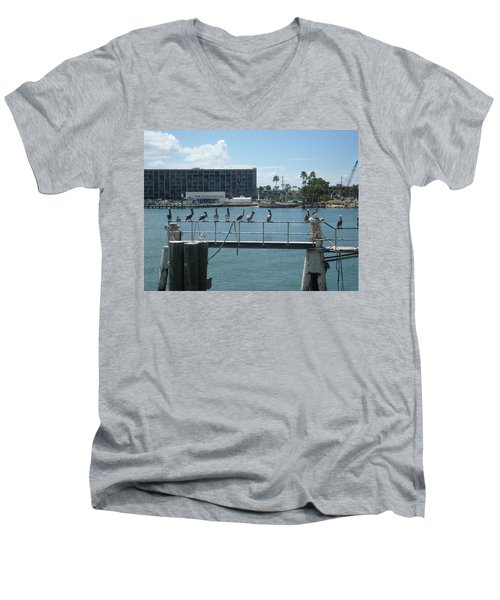 Pelicans In A Row Men's V-Neck T-Shirt by Val Oconnor