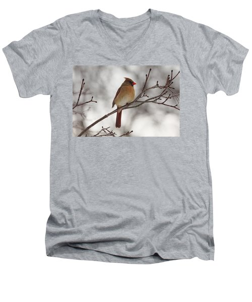 Perched Female Red Cardinal Men's V-Neck T-Shirt by Debbie Oppermann