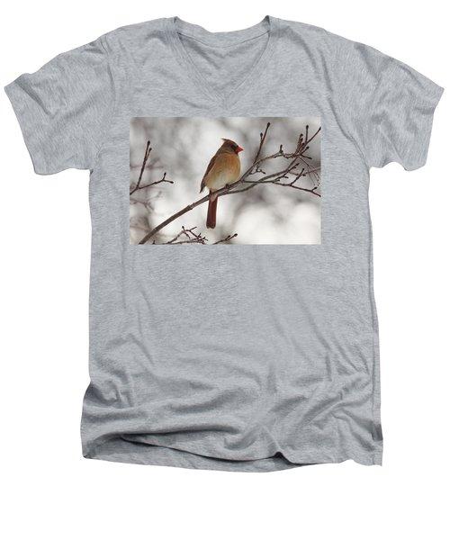 Perched Female Red Cardinal Men's V-Neck T-Shirt