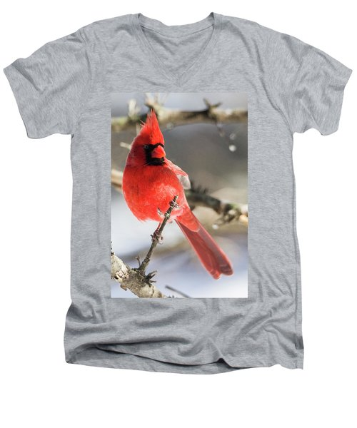 Perching Mister Cardinal Men's V-Neck T-Shirt