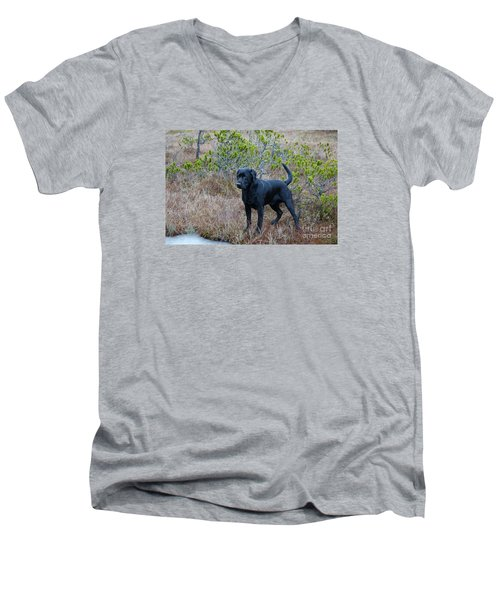 Men's V-Neck T-Shirt featuring the photograph Pet Portrait - Radar by Laura  Wong-Rose
