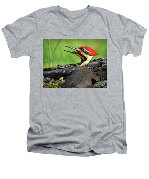 Pileated Men's V-Neck T-Shirt by Douglas Stucky