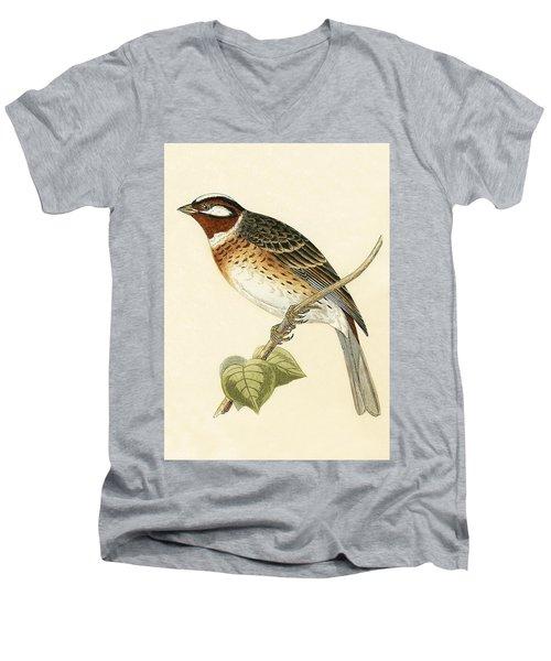 Pine Bunting Men's V-Neck T-Shirt