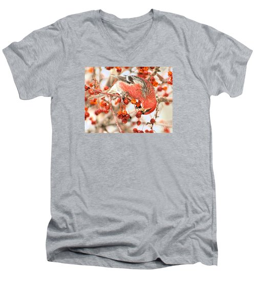 Men's V-Neck T-Shirt featuring the photograph Pine Grosbeak by Debbie Stahre