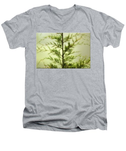 Men's V-Neck T-Shirt featuring the photograph Pine Shower by Brian Wallace