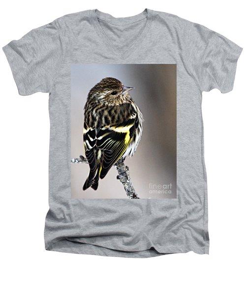 Pine Siskin Men's V-Neck T-Shirt