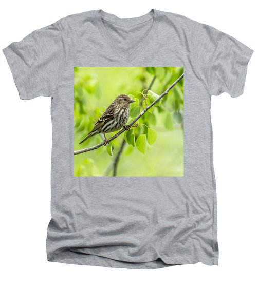 Pine Siskin On A Branch Men's V-Neck T-Shirt by Yeates Photography