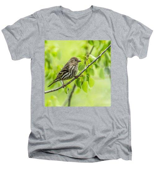 Pine Siskin On A Branch Men's V-Neck T-Shirt