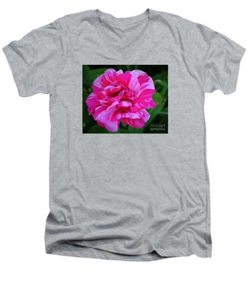 Pink Candy Stripe Rose Men's V-Neck T-Shirt